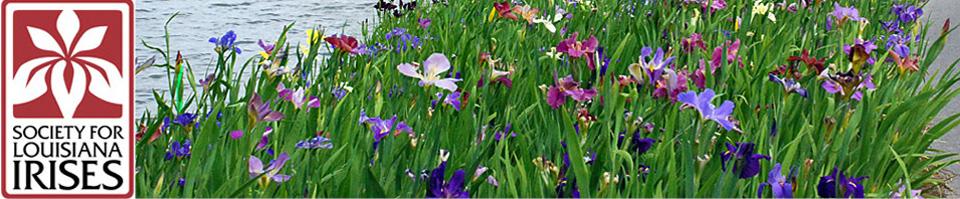 Society for Louisiana Irises